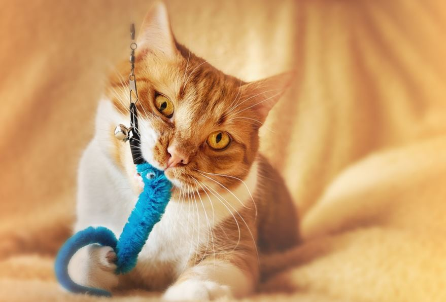chew toys for cats