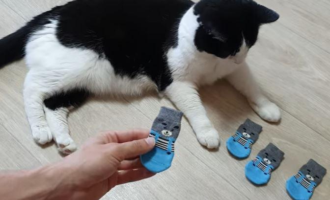 socks for cats