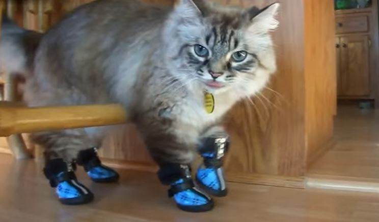 shoes for cats