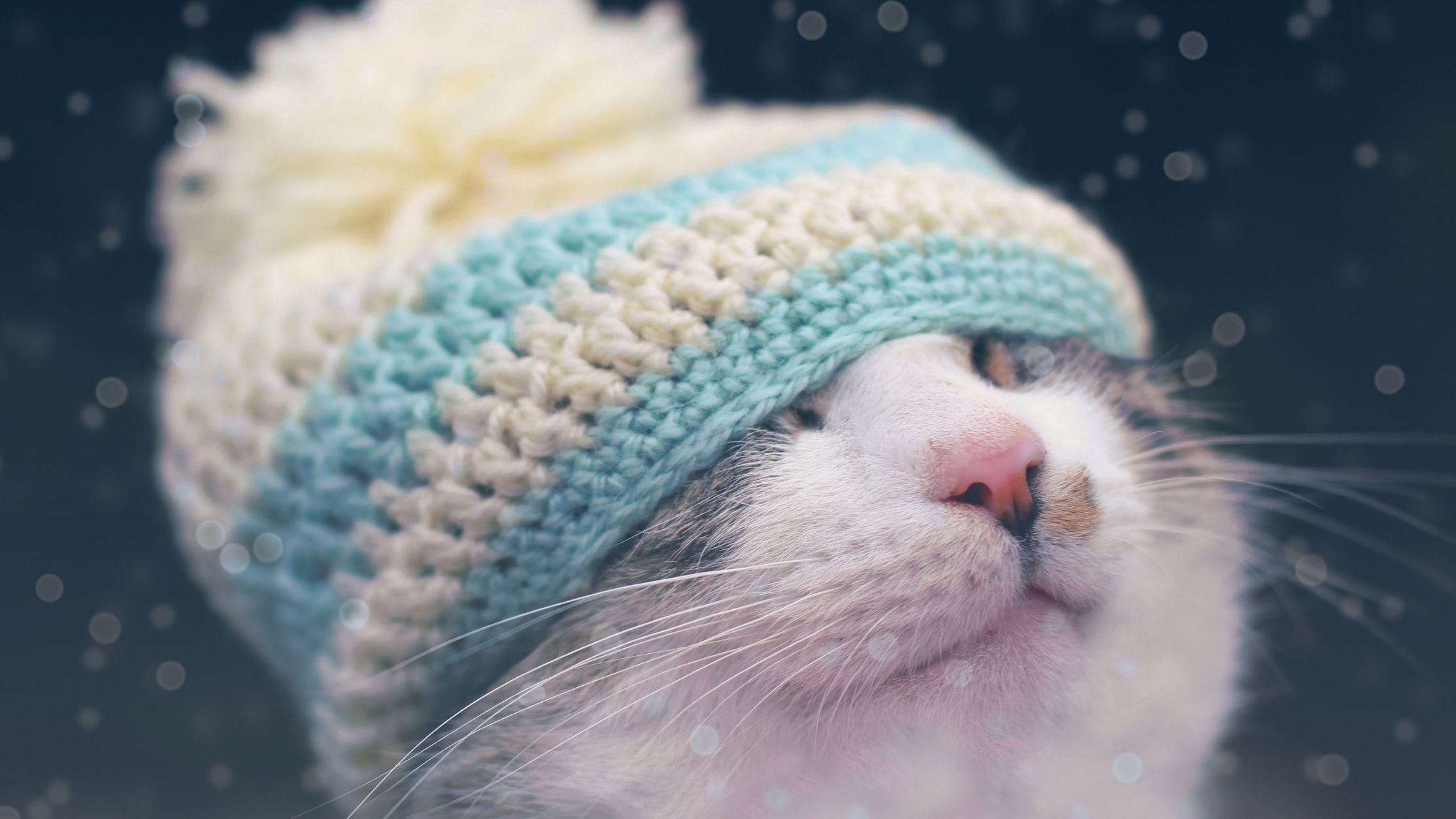 hats for cats: